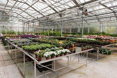groothandelimpressiebeneflorbloemenenplanten3