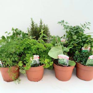 Verschillende tuinkruiden