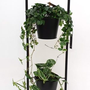 Zwarte, strakke plantenstaander