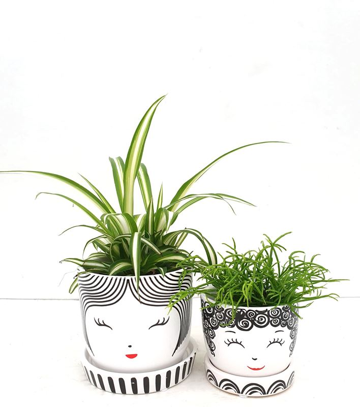 Schattige potjes met leuke kamerplantjes