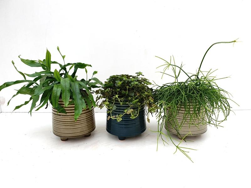 Plant vindt pot